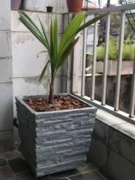 Vaso para planta natural