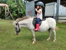 Pônei (mini horse) de procedência