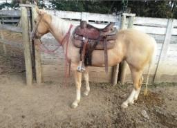 Título do anúncio: Cavalo ( Potra QM )