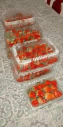 Solar dos morangos orgânicos.