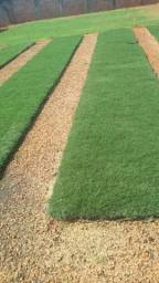 Título do anúncio: Temos variedade de grama