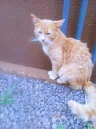 Título do anúncio: gato macho super dócil para doaçao