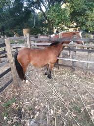 Amanso cavalos