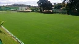 Gramas verde de Qualidades