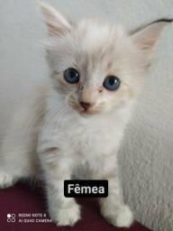 Adoção responsável gatos de 1 mês e 20 dias