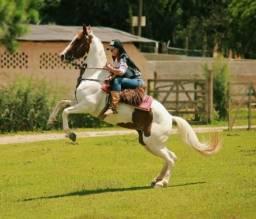 Égua Paint Horse Nova