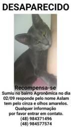 Gato Cinza Desaparecido