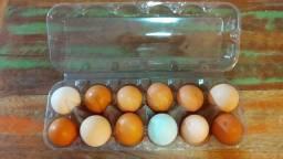 50 embalagens de 12 ovos de galinha