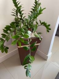 Vendo jarro com planta