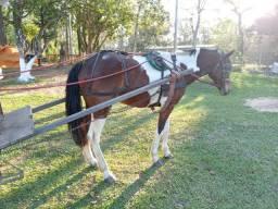 Cavalo tubiano com carroça