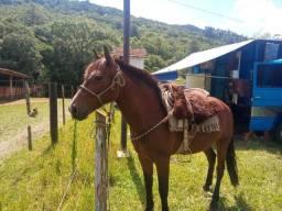 Égua crioula com papel