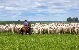 Crédito rural para gado de corte ou leite