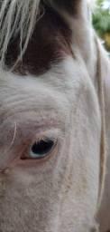 Título do anúncio: Cavalo top de redias e laço