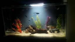 Vendo aquário completo Fauna e Enfeites Super Grande