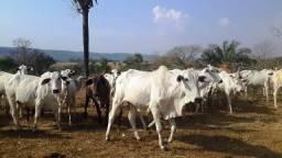 Fazenda 142 ha Serra de São Vicente MT