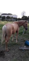 Vendo cavalo de sela e charrete! Cavalo bom e saudável