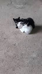 Doação de gatinhos!