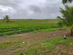 Granja com 10 hectares em São Miguel do gostoso