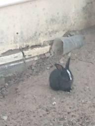 Título do anúncio: Vendo filhotes de coelhos em Nova Esperança