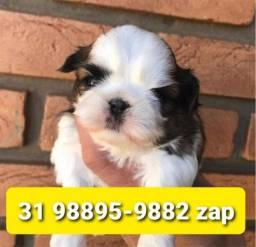 Título do anúncio: Canil Filhotes Cães Top BH Shihtzu Maltês Lhasa Beagle Poodle Yorkshire Basset