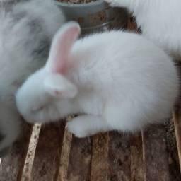 Título do anúncio: Filhotes de coelho