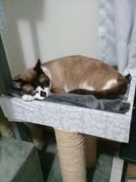 Doa-se gato castrado de 1 ano e meio