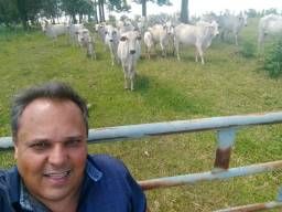 Vende-se ou Arrendo Fazenda entre Jáguapita e Guaraci