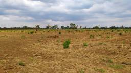 2.750 Há. Plana - Argilosa - Safra/Safrinha. Sul do Pará