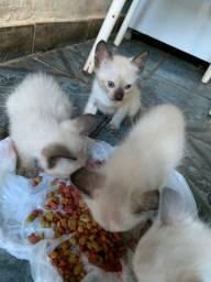 Filhotes de gatos (doação)