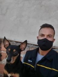 Título do anúncio: Adestrador de Cães