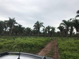 Fazenda no Município Cantanhede - Vendo