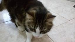 Gato chamado Principe