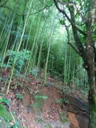 Vendo varas de bambu de fazer moveis
