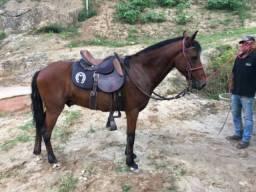 Cavalo de marcha batida