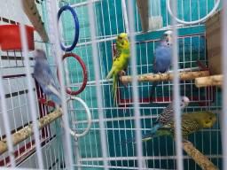 Título do anúncio: 3 fêmeas e 2 machos