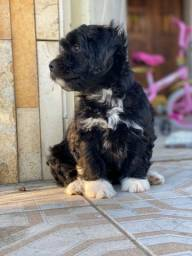 Título do anúncio: Cachorra de pequeno porte
