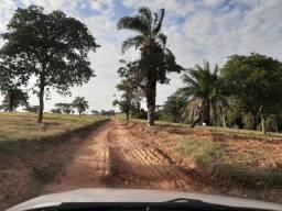 Título do anúncio: Eliane - Fazendão em Buritama/SP - 63 alqueires