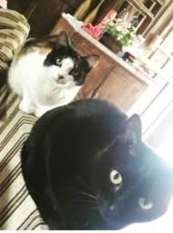 Gatos Castrados para doação