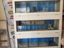Expositor de Peixes Bateria