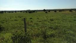 Permuto Tangará, 275 hectares Pecuama, todo aberta, sede, Nova Marilândia?MT,