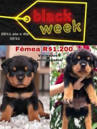 Filhotes da raça Rottweiler PUROS, vacinados e vermifugados 1.200 Débito e crédito 3x