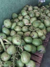 Distribuidora de Água de Coco natural em garrafas e produtos naturais