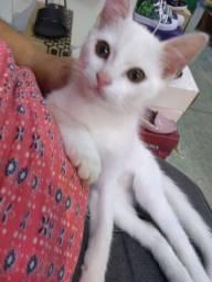 Gato pra doar