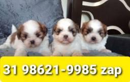 Título do anúncio: Canil Filhotes Líder Cães BH Lhasa Poodle Maltês Shihtzu Yorkshire
