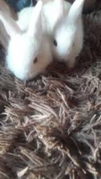 Título do anúncio: coelhos a pronta entrega
