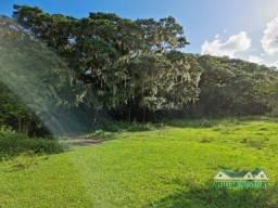 Velleda oferece lindo sítio plano, com água corrente e estrondosa figueira