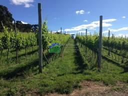 Vinhedo em Urubici/ plantaçao de uva em Urubici/ investimento em Urubici
