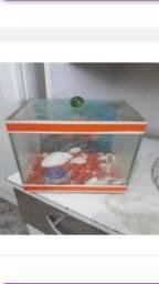 Aquario do Nemo