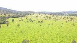 Fazenda 194 Uruaçu-GO