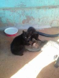 Gatinhos pra adoção